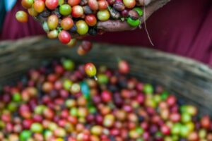 Sustainable From Bean to Brew